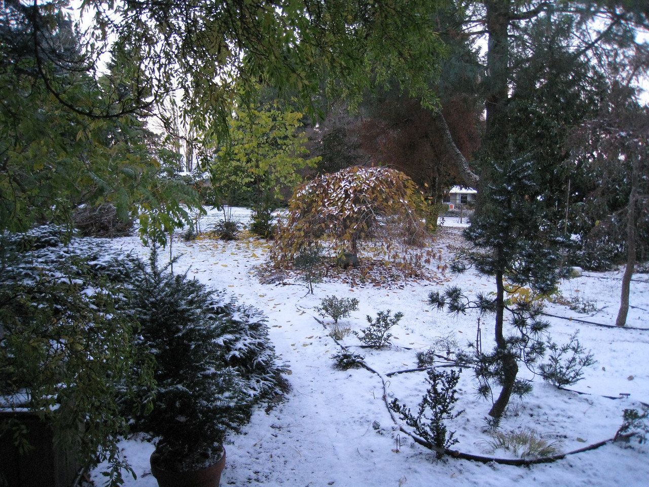 A snowy & cold November 23rd!