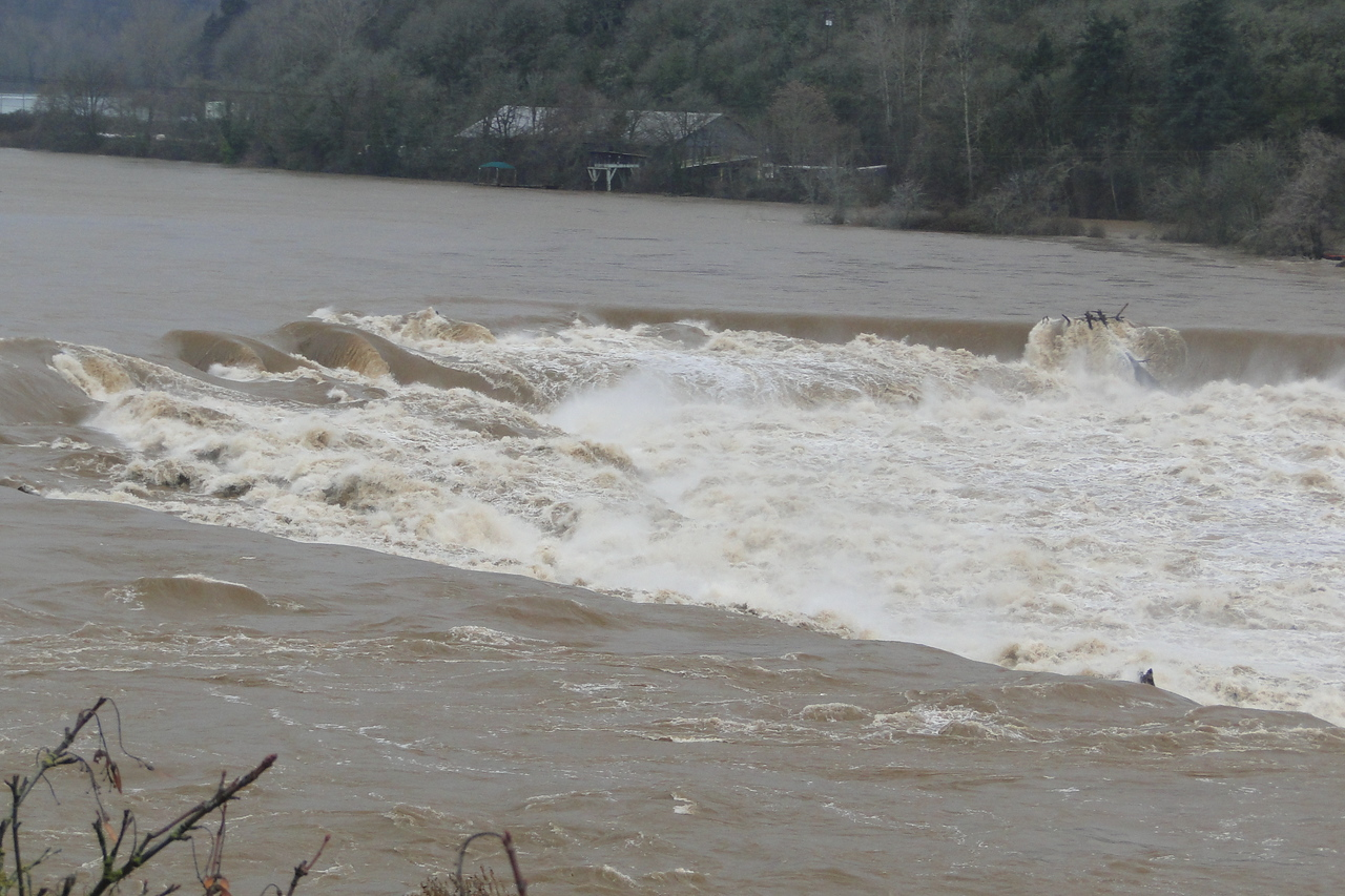 Willamette Falls at Oregon City after a week of heavy rain!