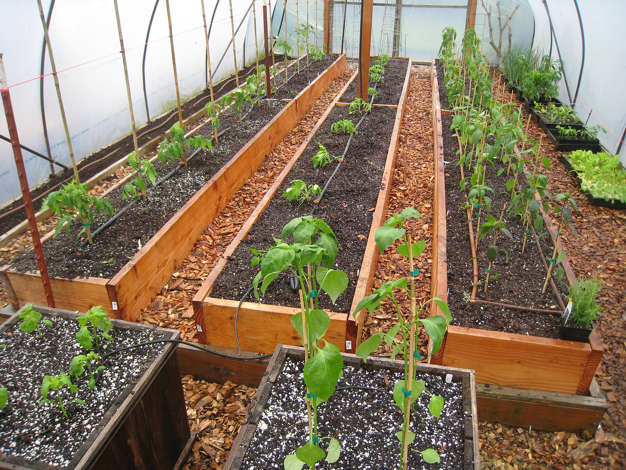 So, is it possible for one man to have too many Tomato & Pepper Plants? One asks rhetorically.....