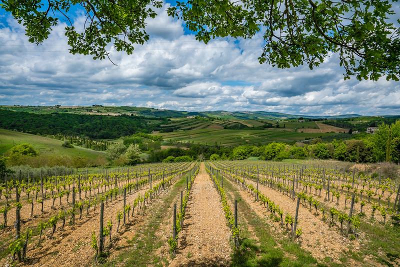 vineyards tuscany