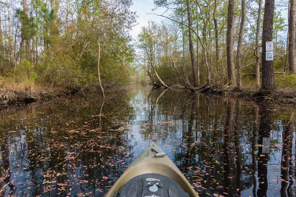 Things to do in Virginia Beach: Kayak in a Wildlife Refuge