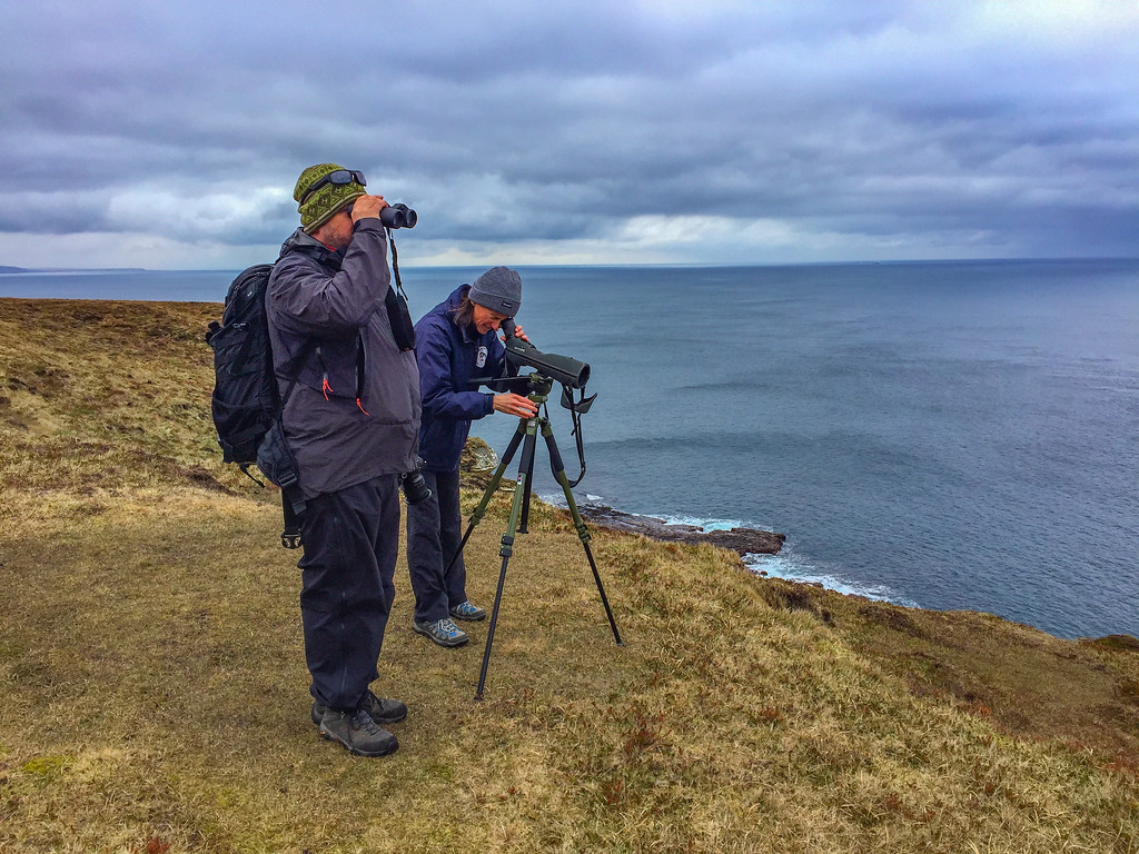caithness wildlife tours north coast 500