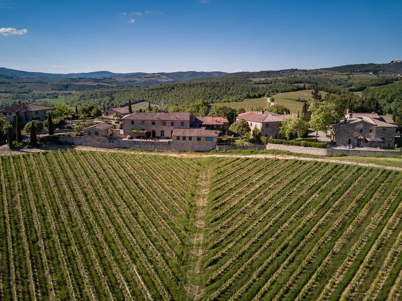 vineyards of Borgo Argenina