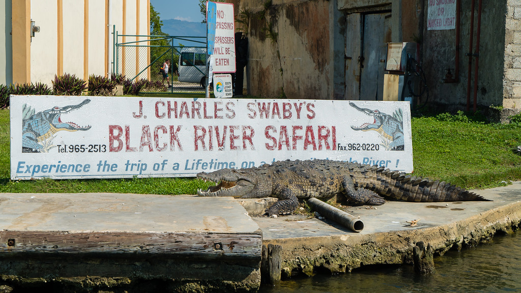 Black River Safari Jamaica