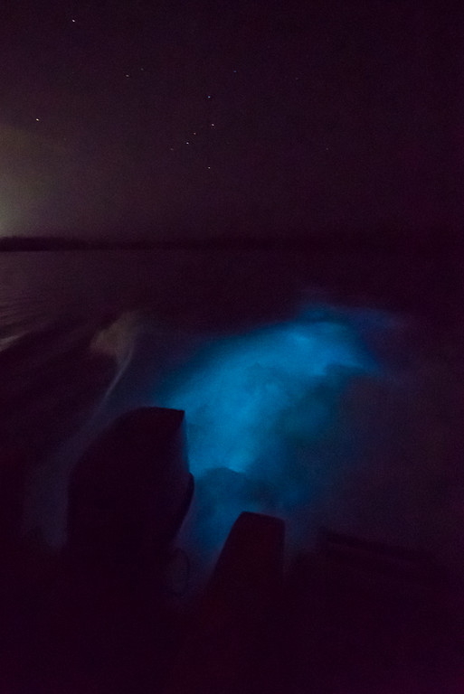 The bioluminescence in Jamaica