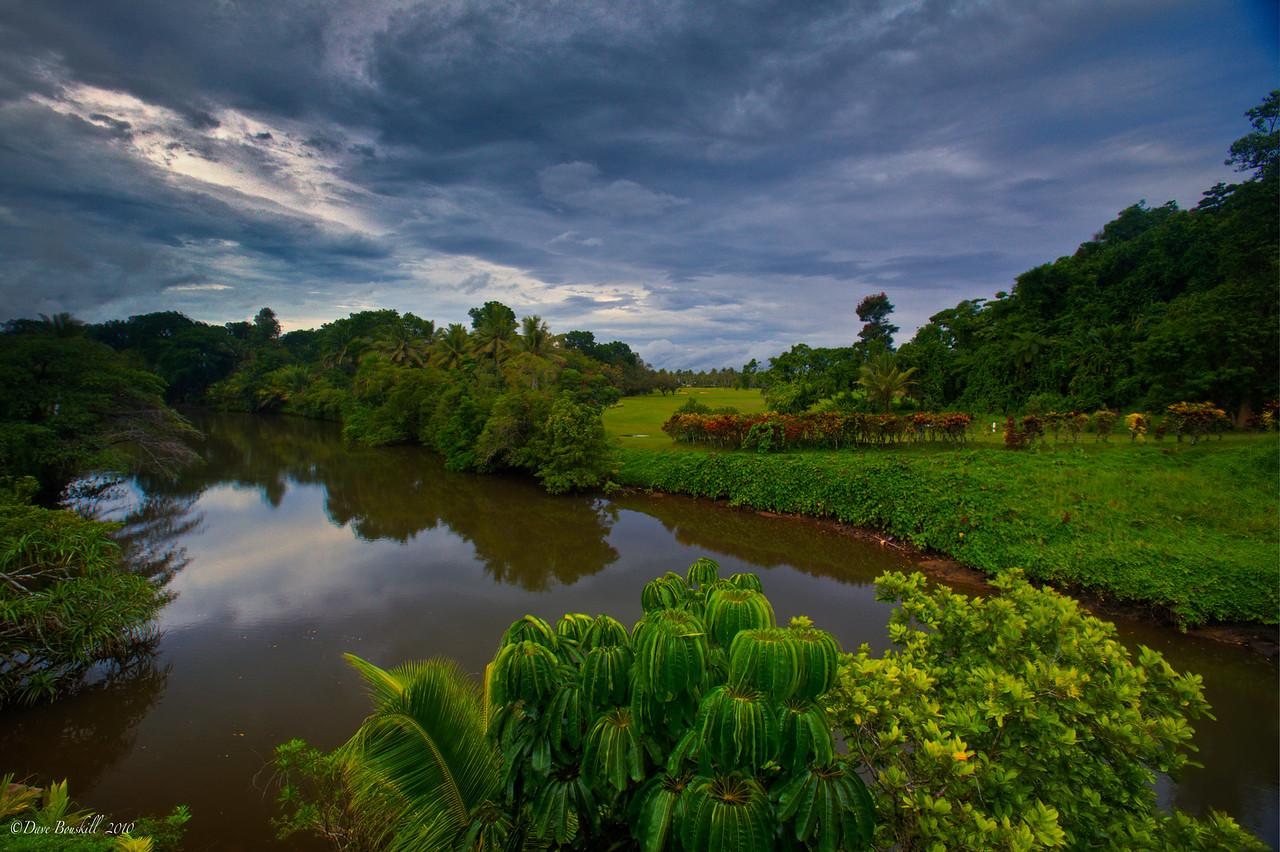Fiji tropical rainforest