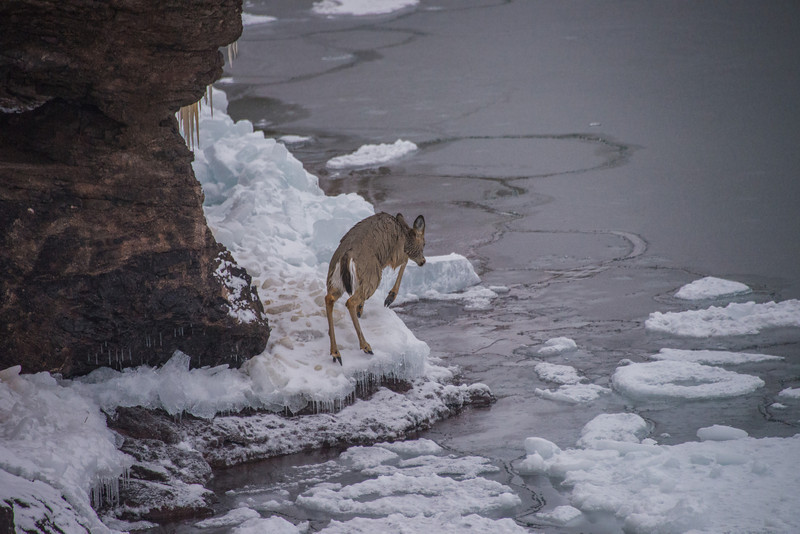 Out for a Swim in Lake Superior
