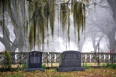 Greenwood in Mist
