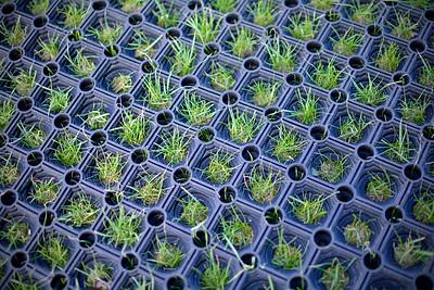 Tufts of grass growing through golf tee platform