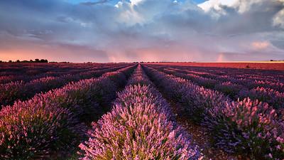 Valensole, Alpes-de-Haute-Provence, France