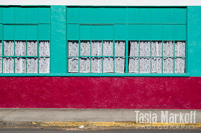 Color and contrast in Vernonia