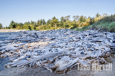 Beach covered with driftwood at Cape Disappointment