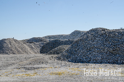 Piles of oyster shells
