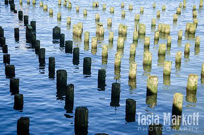 Old dock remains in yin/yang of light