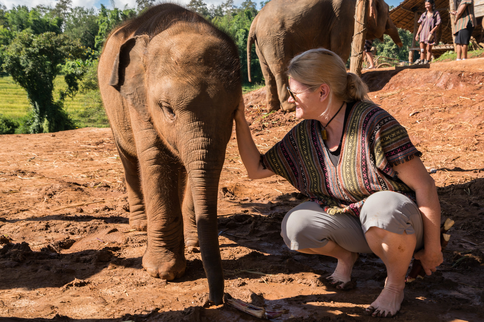 Finding an Elephant Sanctuary in Chiang Mai
