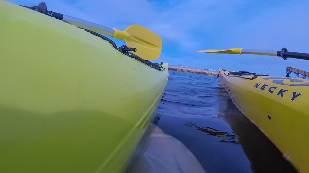 Beluga whales manitoba
