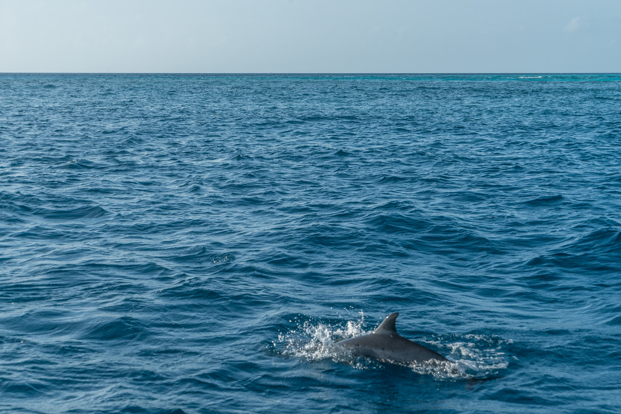 The dolphins got so close to the boat in the Maldives