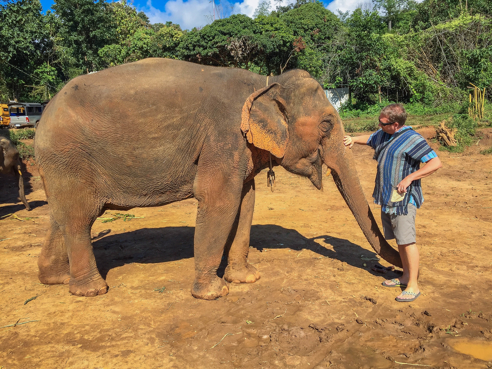 These are not wild elephants at the Elephant Sanctuary Chiang Mai