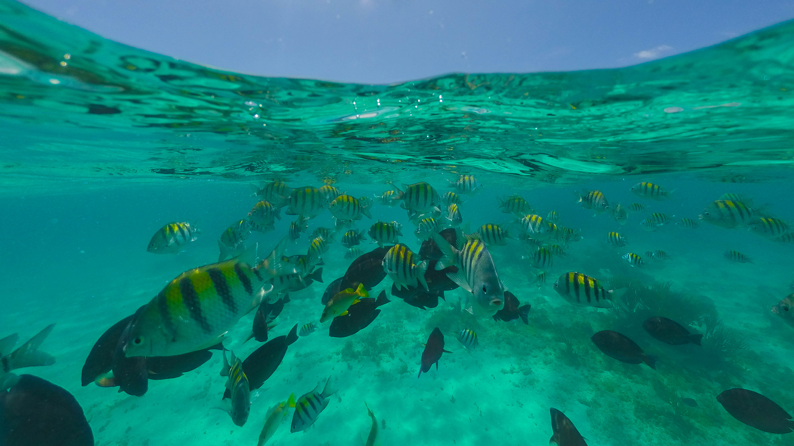 What to do in Grand Cayman: Go Snorkelling