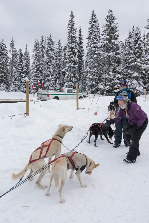 sled dogs banff national park