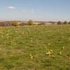 Magdalen Hill Down 5867