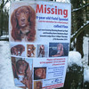 missing dog in Sheffield 8461
