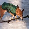 dog with stick 8106