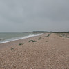 Pagham Harbour 7466