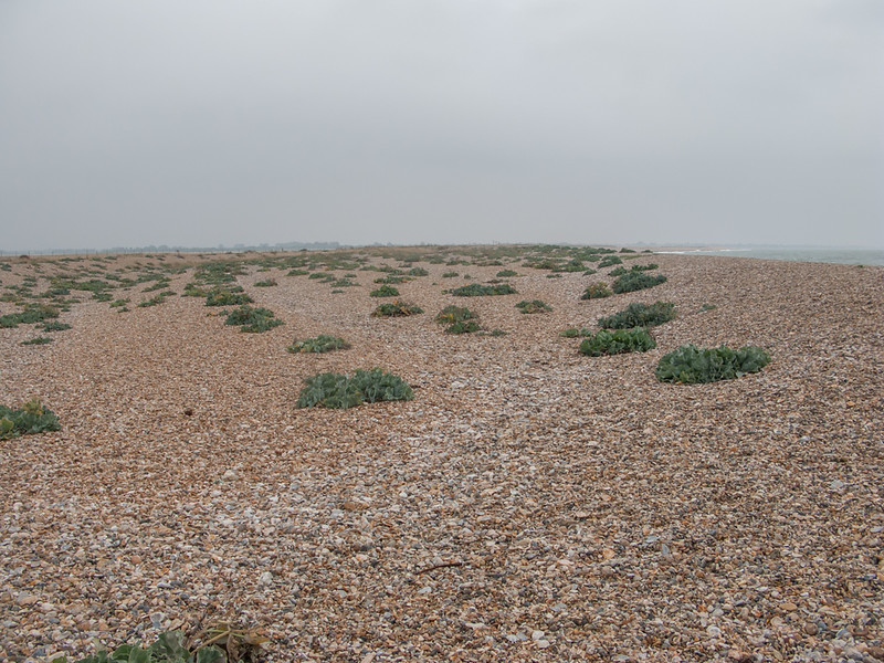 Pagham Harbour 7465