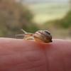 snail noid 7791