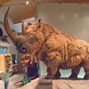 Weston Park Museum, Sheffield 7629