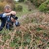 photographing the Long-tailed Blue ♀, Lampides boeticus 0004