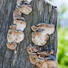 fungus noid 9788