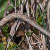 moth larva looper noid 7063