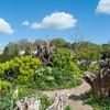Wood Spurge, Euphorbia amygdaloides, Arundel Castle gardens 9123