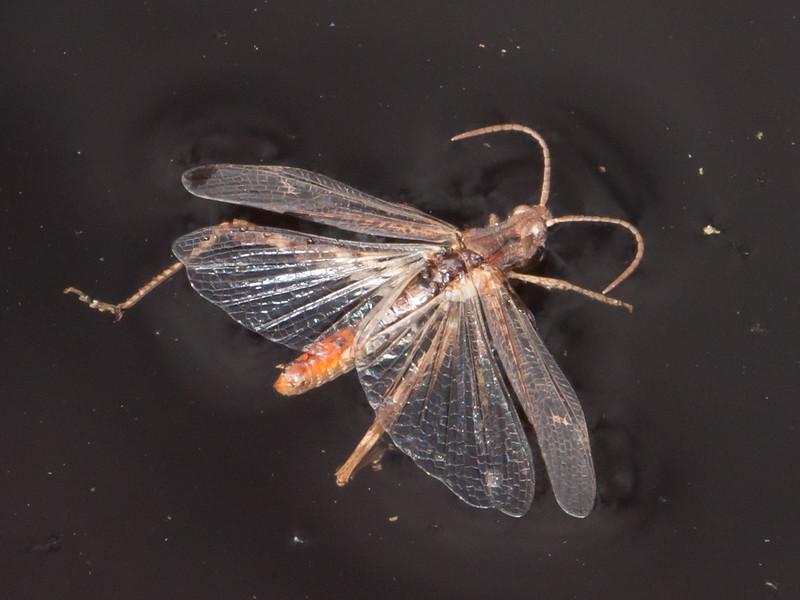 grasshopper noid 0614
