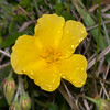 flora noid 3229