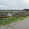 West Wittering by dunes 8695