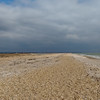 Pagham Harbour (8)