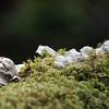 bracket fungus noid 3259