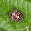 spider noid 2899