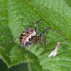 spider noid 2897