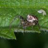spider noid 2896