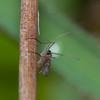 micro fly noid 8799