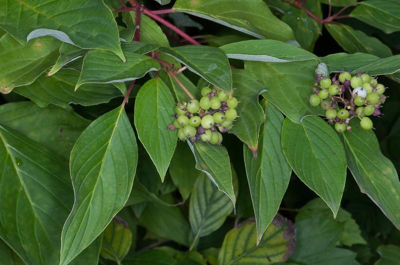 flora berries noid 2696