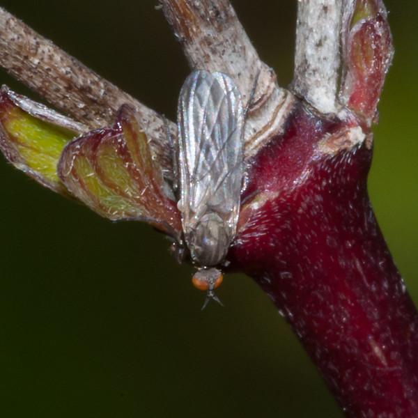 fly noid 8714