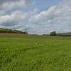 Red Poppies, Papaver rhoeas, Midhurst-Petworth 3427