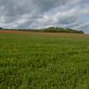 Red Poppies, Papaver rhoeas, Midhurst-Petworth 3437