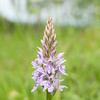 Common Spotted-orchid, Dactylorhiza fuchsii, f8 400s 82mm 4262