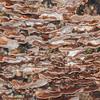 Bracket fungus noid 2072